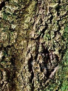 木、樹皮のテクスチャの写真・画像素材[3507889]