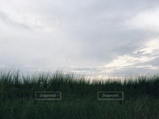 草から見上げた曇り空の写真・画像素材[3494974]