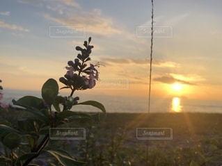 砂浜の植物の写真・画像素材[3505633]