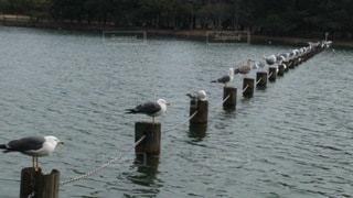 整列している鳥の群れの写真・画像素材[3479706]