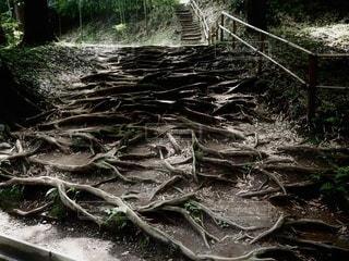 森の中の写真・画像素材[3484640]