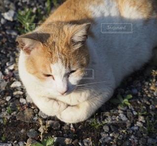 猫の写真・画像素材[3484639]