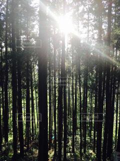 木の写真・画像素材[160799]
