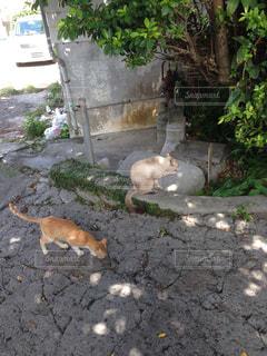 猫の写真・画像素材[160826]