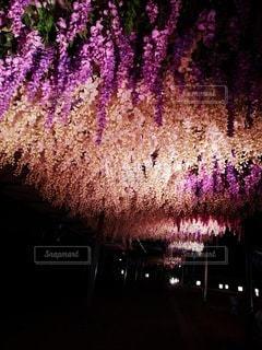 空の花火の群の写真・画像素材[3491384]