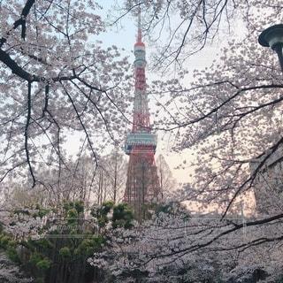 芝公園お花見スペースから見た東京タワーの写真・画像素材[2709472]