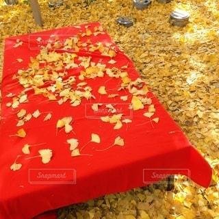 黄色い絨毯の写真・画像素材[3558909]