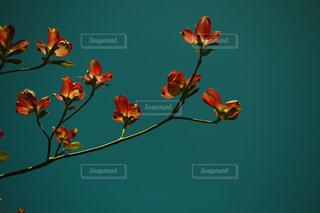 花のクローズアップの写真・画像素材[3484557]