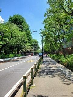 夏日の通りの写真・画像素材[3484428]