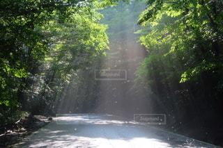 森の光のカーテンの写真・画像素材[3485997]