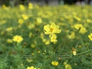 野原の花の写真・画像素材[3651722]
