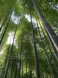 竹の写真・画像素材[4643939]