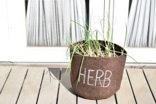 根元から少し残した万能ネギをオシャレな植木鉢でエコ栽培の写真・画像素材[4119771]