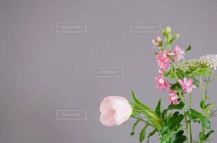 薄い紫グレーの壁の前に生けたピンク色の花たちの写真・画像素材[4308451]