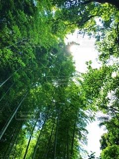 真夏の暑い日に歩いた涼やかな竹林の散歩道の写真・画像素材[4660309]