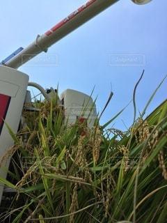 お米の収穫の写真・画像素材[3634961]