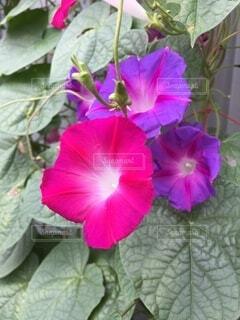 花のクローズアップの写真・画像素材[3715743]
