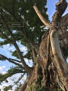大樹の写真・画像素材[3752784]