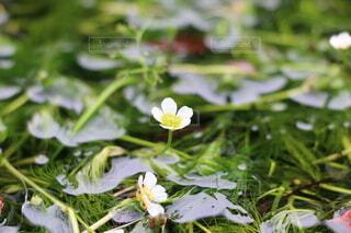 花のクローズアップの写真・画像素材[3778800]