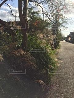 木のクローズアップの写真・画像素材[3813318]