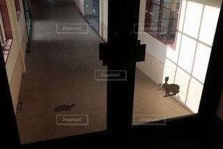 ウサギとカメの写真・画像素材[3905795]