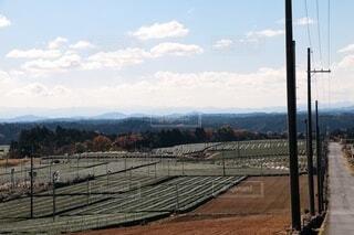 茶畑の写真・画像素材[3995824]