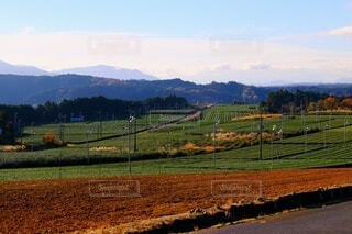 茶畑の写真・画像素材[4001041]