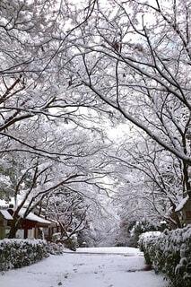 雪景色の写真・画像素材[4145692]