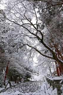 雪景色の写真・画像素材[4145720]