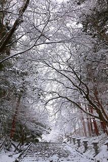 雪景色の写真・画像素材[4145745]