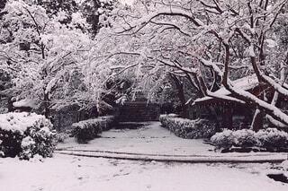 雪景色の写真・画像素材[4146582]