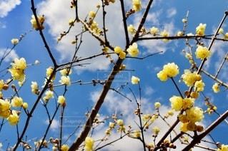 黄色い花の写真・画像素材[4177997]