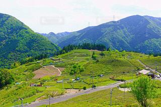 天空の茶畑の写真・画像素材[4395506]