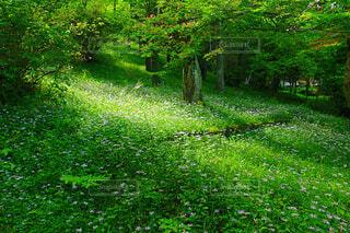 新緑の写真・画像素材[4414366]