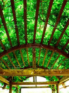 緑のトンネルの写真・画像素材[4571683]