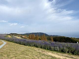高原に咲くラベンダーの写真・画像素材[3489702]