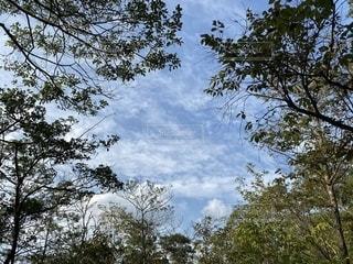 森から見える空の写真・画像素材[3489708]