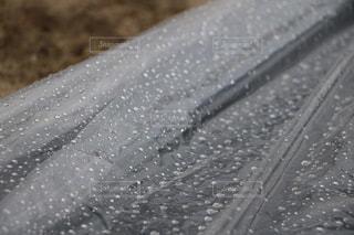 雨粒の写真・画像素材[3489711]