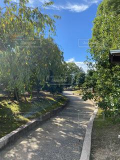 木々の中のある道の写真・画像素材[3687659]