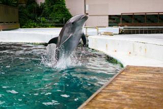 水から飛び降りるイルカの写真・画像素材[3499823]