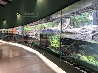 水族館の写真・画像素材[3647437]