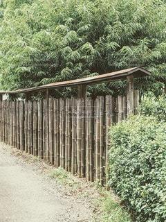 竹垣の写真・画像素材[3503920]