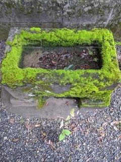神社 手水舎の写真・画像素材[3508060]