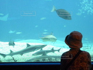 水族館の写真・画像素材[3531271]