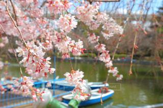 春 - No.412117