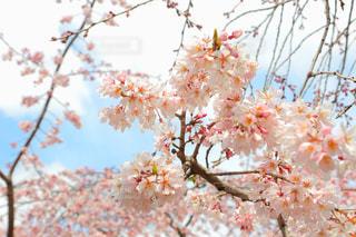 春 - No.412121