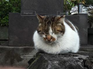 猫三昧の写真・画像素材[150729]