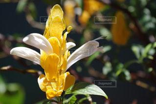 花の写真・画像素材[150775]