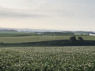 背景に木々のある大きな緑のフィールドの写真・画像素材[3506841]