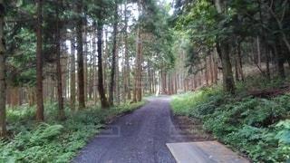 道路の脇に木がある道の写真・画像素材[3507009]